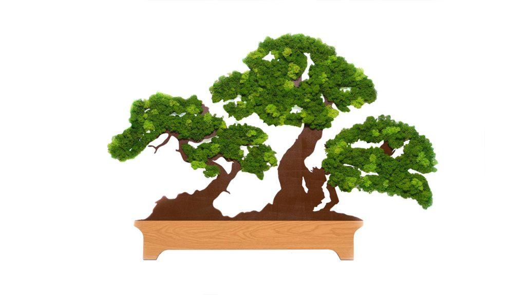 Read more about the article Bonsai decorat cu licheni
